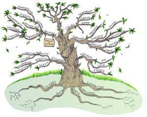 มายแมพ ต้นไม้